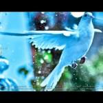 Faakhir-Bailiya-Video-Shoot (13)