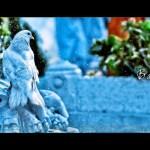 Faakhir-Bailiya-Video-Shoot (5)
